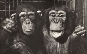lrg-786-monkeys_-_best_friends